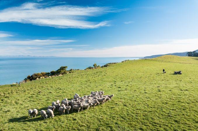 NZ scientists lead the charge to explore benefits of pasture-raised beef and lamb