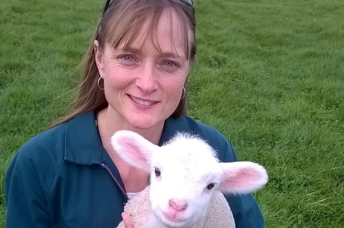 New lamb rearing guide now available