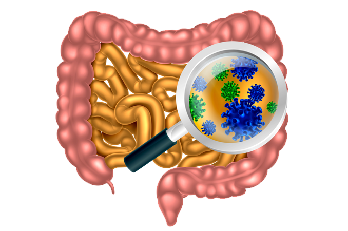 AgResearch-led project receives $3.6 million for research into gut health