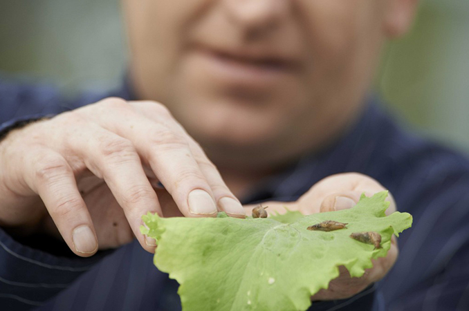 Investigating the potential for slug biocontrol | NZ