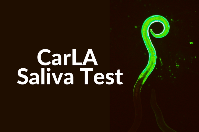 CARLA Saliva Test | Agricultural Research | AgResearch NZ