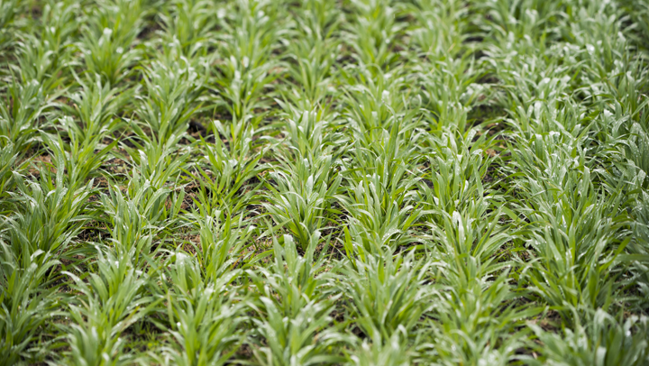 agresearch products services thumbnail forage